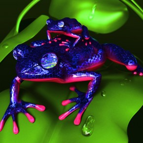 The Glittering Frog